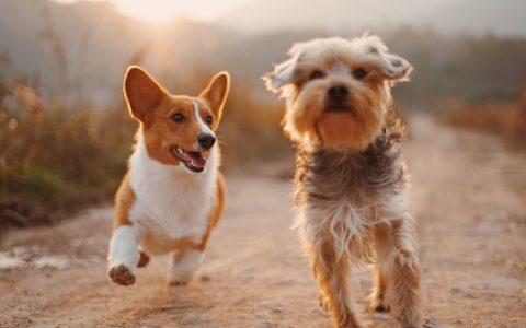 宠物们的幸福生活值 1,708 亿